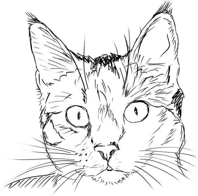 relatos cortos, gatos