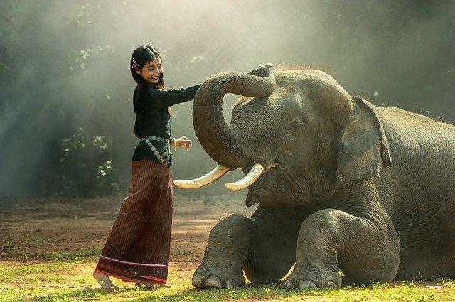 4 relatos cortos sobre elefantes